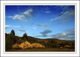 Buzzard, near Grantown-on-Spey, Morayshire, Scotland