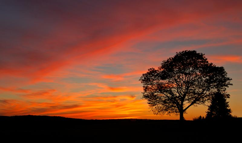 Big Tree Sunset ~Haverhill, MA