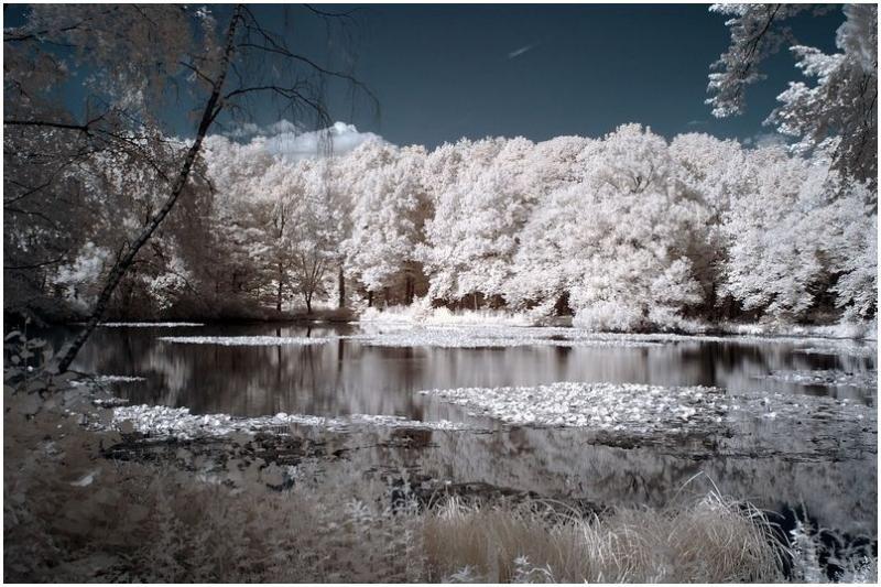 Local pond_a