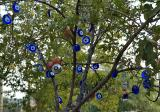 Foça, the 'evil eye' tree
