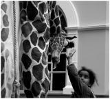 Blind girl and giraffe