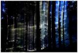 Dreamforest 06