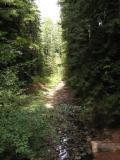 Elk Creek