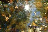 Reflections in Pool.jpg