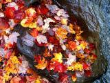 Leaves in Rock by Stream.jpg