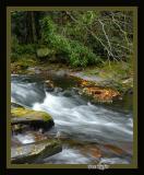 Leaves Along Little River