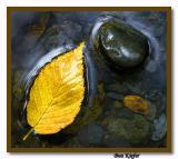 Birch Leaf and Stone