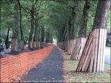 C'est sans doute la plus belle avenue cyclable de Bruxelles... (16/9/2005)