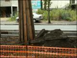 Bravo ! Protection judicieuse des arbres (1). (16/9/2005)