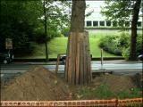 Bravo ! Protection judicieuse des arbres (2). (16/9/2005)