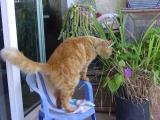 She at her lemon grass pot !!!