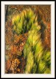Le dragon d'algues