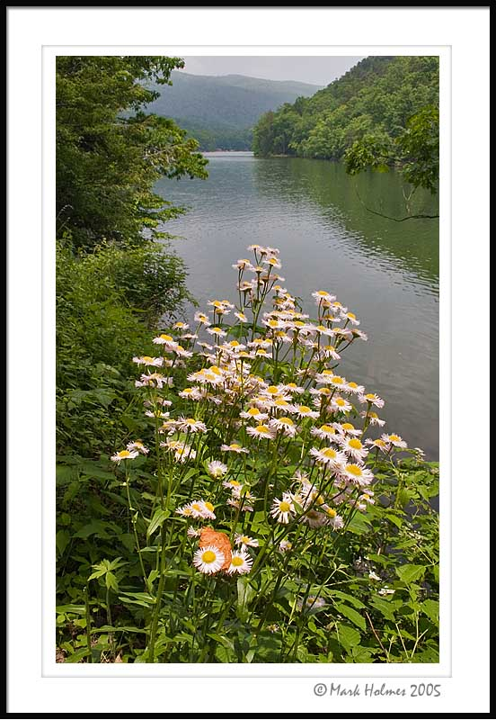 Hungry Mother State Park Lake and fleabane