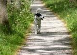 30: happy walk