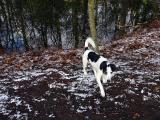Joop's Dog Log - Thursday Jan 27