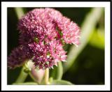 ds20050930_0150awF Flower.jpg