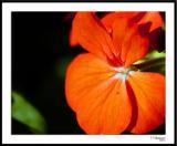 ds20050930_0168awF Flower.jpg