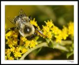 ds20050930_0173awF Bee.jpg