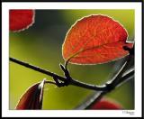 ds20050930_0222awF Leaf.jpg