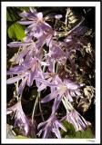 ds20050930_0241awF Flowers.jpg