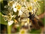 blossom, nectar and insect