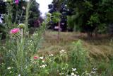 Where the garden once was, now nature has its own