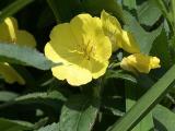 yellow summer flower