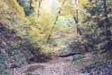 leaf covered creek bed