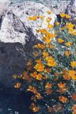 washington wild flower