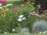 kleckner early summer garden