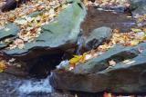 fall leaves in a mini fall