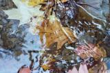 leaves under water