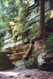 tree growing on stone