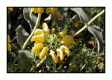 Lesbos - flora - DSCN5082.jpg