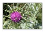 Lesbos - flora - DSCN5088.jpg