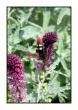 Lesbos - fauna - DSCN5504.jpg