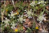 Lesbos - flora - DSCN5496.jpg