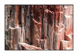 Petrified Forest - DSCN5610.jpg
