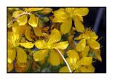 Lesbos - flora - DSCN5816.jpg