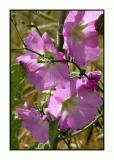 lesbos - flora - DSCN5704.jpg