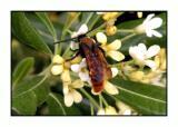 Lesbos insecten - DSCN6208.jpg