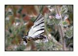 Lesbos - vlinder - DSCN6321.jpg