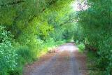 Watery Lane - Spring