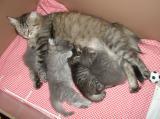 essi_kittens030805.jpg