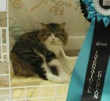 Also the GIC rosette was brought to this show.