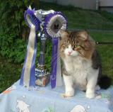 Here with the new trophy and  rosettes for Best In Show.
