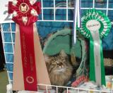 Those look nice - nomination medal and rosettes