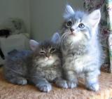Tiger ja Otto