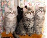 F-kittens posing