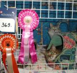 Both girls got their Ex1 and rosettes.